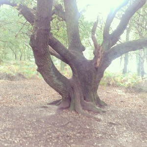 One of the clearings found by Bean