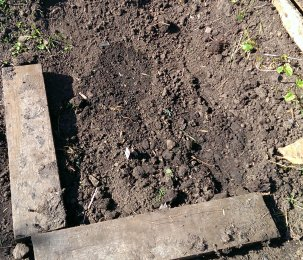 May not look like much, but Bean and Plum dug and weeded this themselves and planted poppies and sunflowers